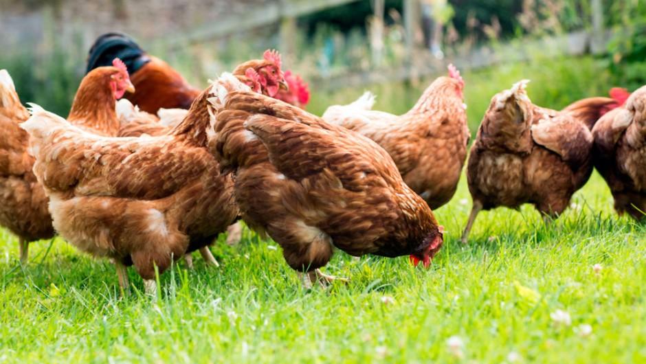 Artgerechte Tierhaltung entscheidend beim Eierkauf
